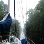 The Great Dismal Swamp - Fog