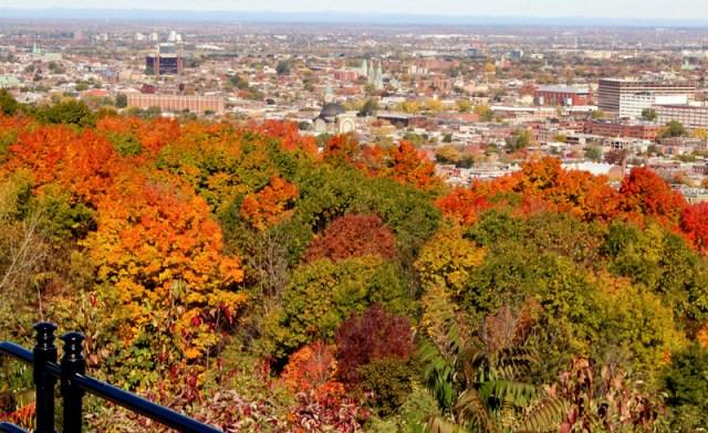 Montreal leaf-peeping