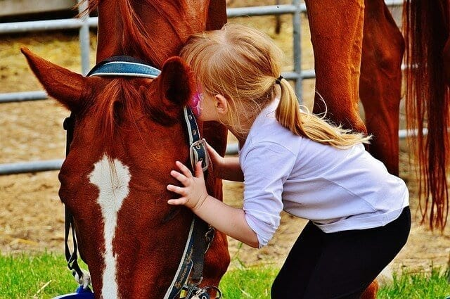 Equine Gestalt Work for Kids