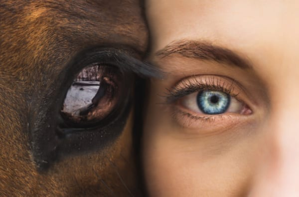 Powerful Lessons from Horses That Can Help Heal Us