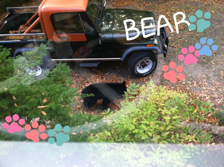 A teenage bear strolling through our driveway last fall