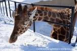 07Feb14 Asahikawa Asahiyama Zoo 012