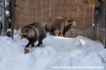 07Feb14 Asahikawa Asahiyama Zoo 035