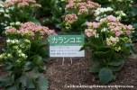 09Feb14 Sapporo 019