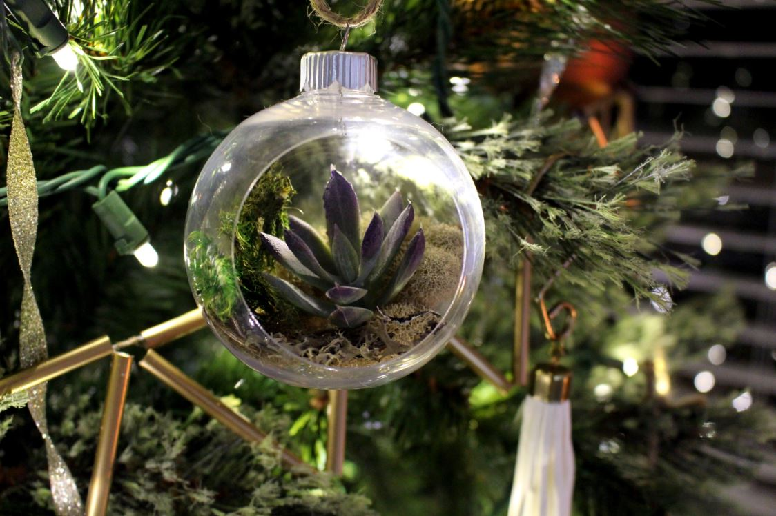 Succulent plants turned into an ornament