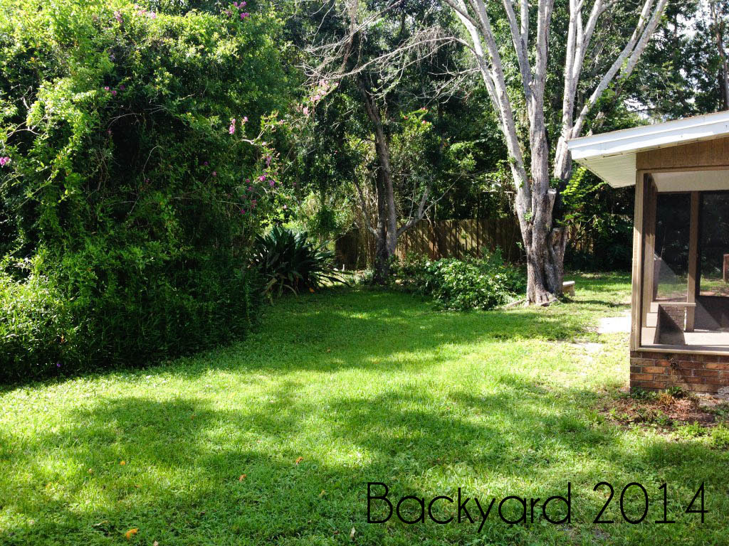 Overall backyard when we bought the house