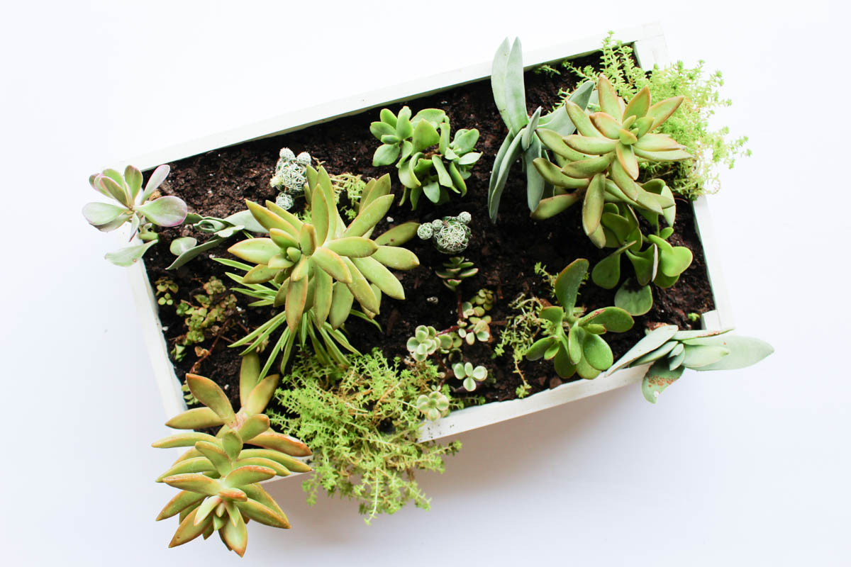 One Spot Diy Succulent Garden Box Within The Grove