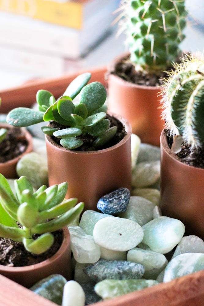 Seriously, Weu0027re Getting Creative And Budget Friendly With This DIY  Project. Hereu0027s Everything You Need And The How To To Create Your Own Succulent  Garden ...
