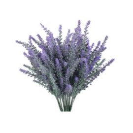 Lavender for Your Home - Within the Grove