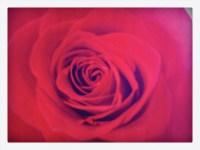 romanticrose07-10-16
