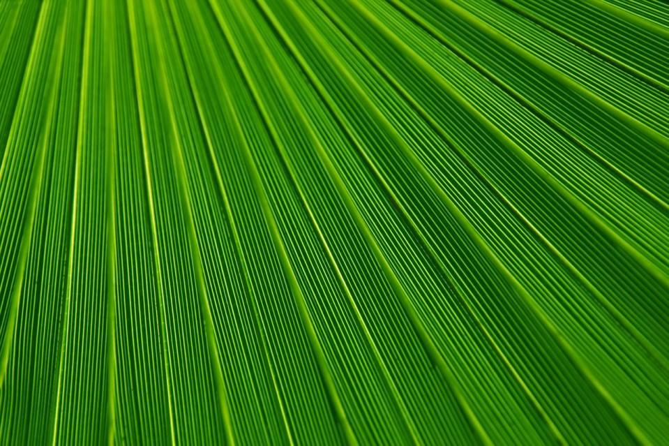 A green leaf.
