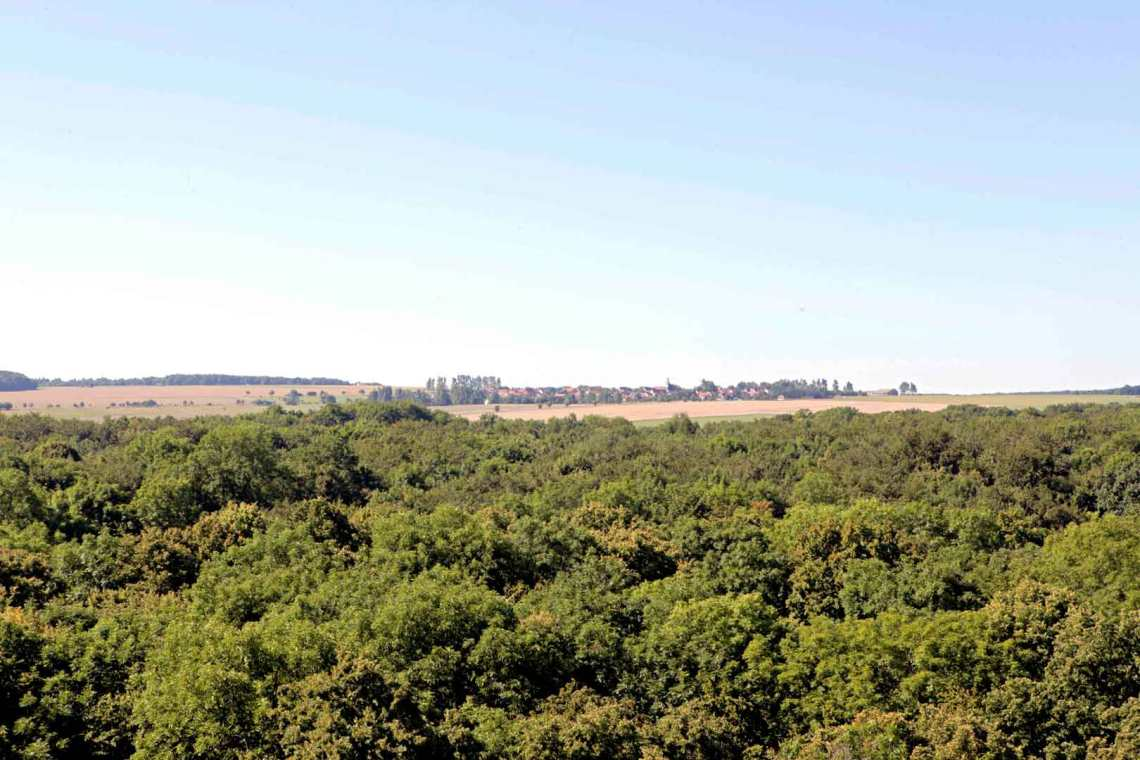 view-from-the-treetop-trail-in-hainich-national-park