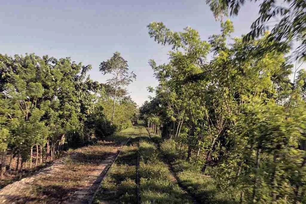 Honduras Train Tracks Cuero Y Salado