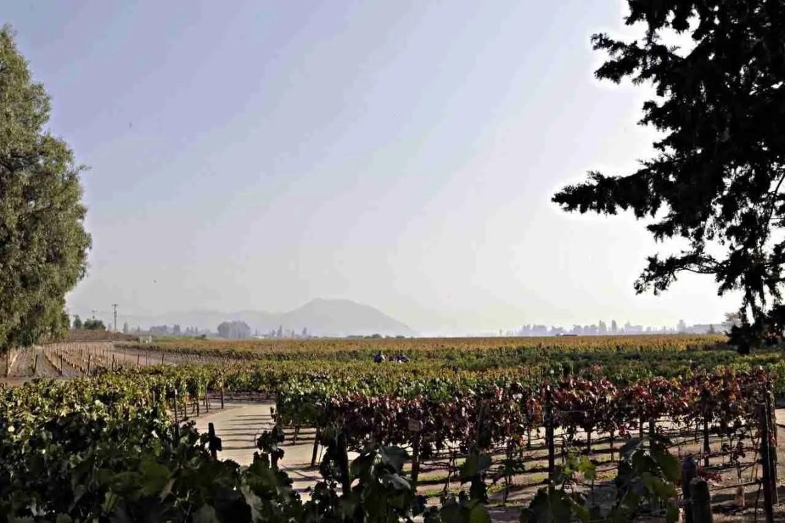 Concha y Toro Vineyard in Chile