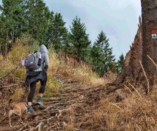Hiking in Germany Rothaarsteig