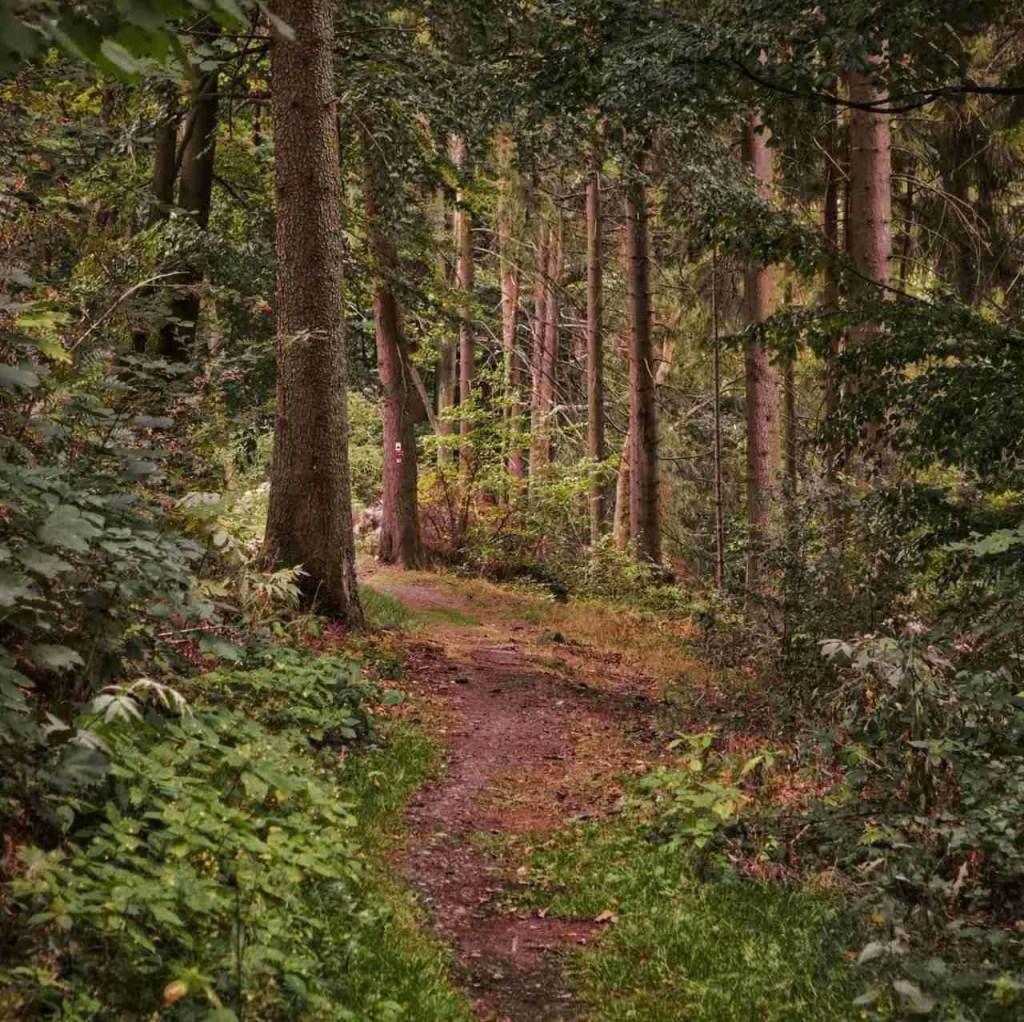 Rothaarsteig Hiking Trail in Germany