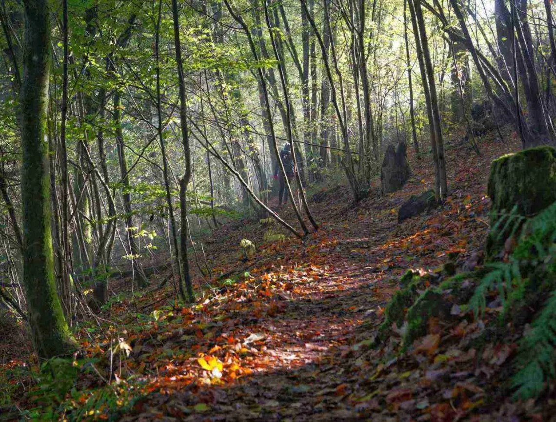 Moselsteig Trail