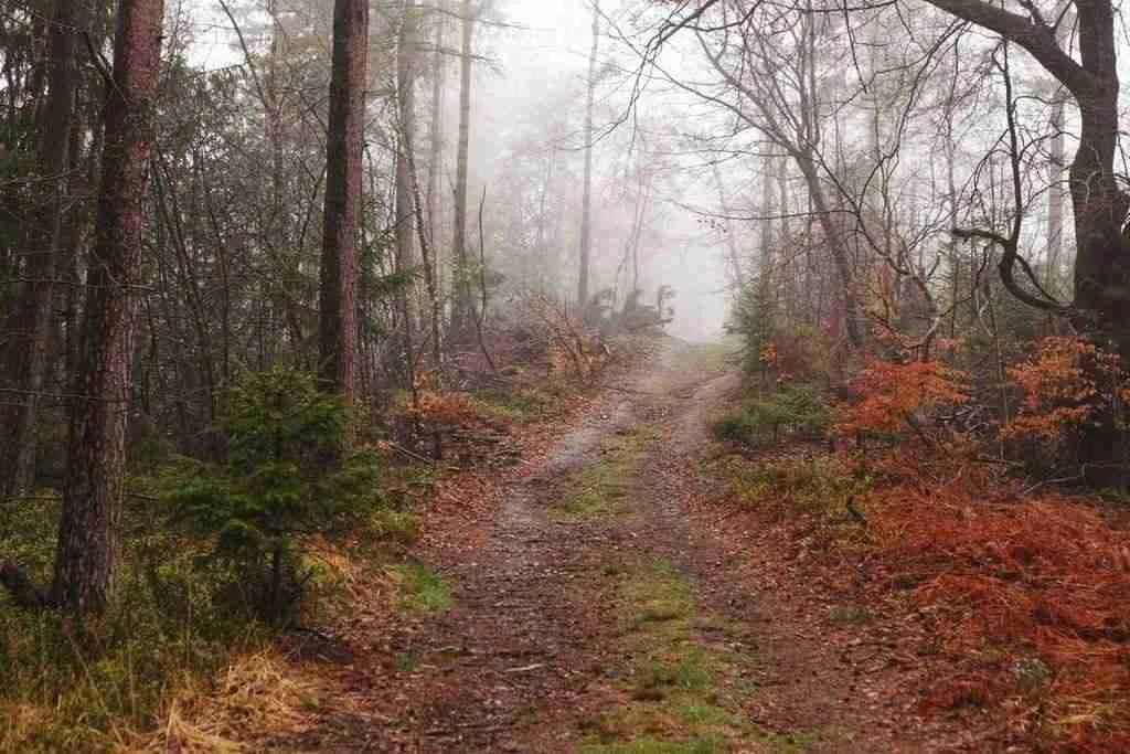 Hermannshoehen Trail Fog