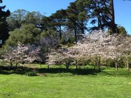 Spring in Golden Gate park