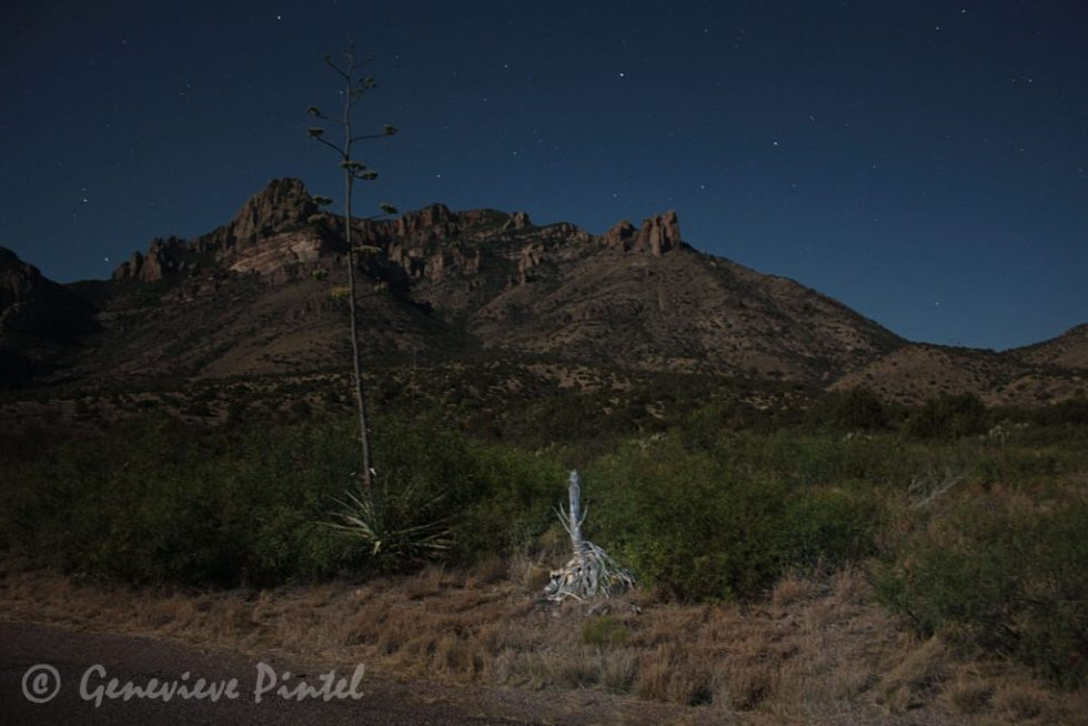 Desert dunes and plants at night