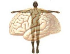 Image result for mind body connection