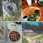 Instagram Lately: Farms, Fireworks & Freedom Ringing