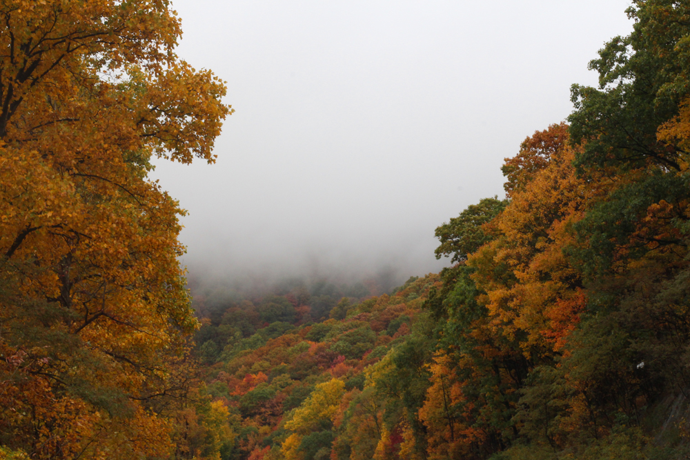 Foggy PA
