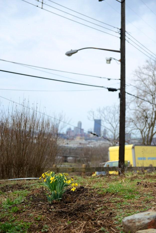 Spring at Hazelwood Urban Farms // www.WithTheGrains.com
