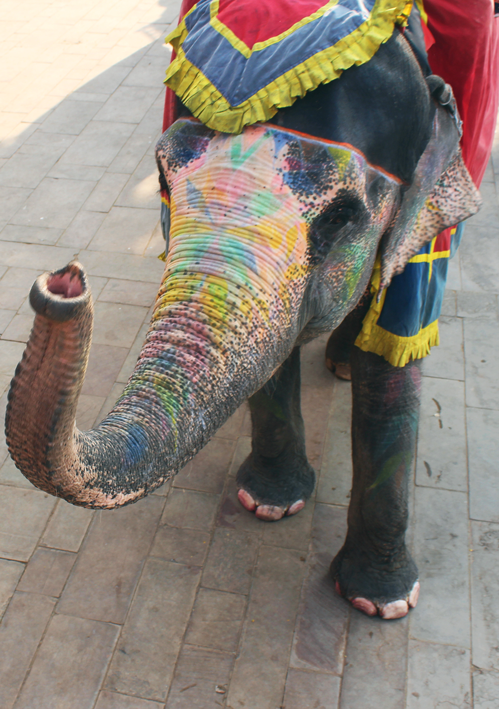 Indian Elephant // www.WithTheGrains.com