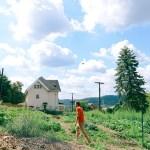 Farm Scenes + Roasted Beet, Cucumber, Mint & Heirloom Tomato Salad