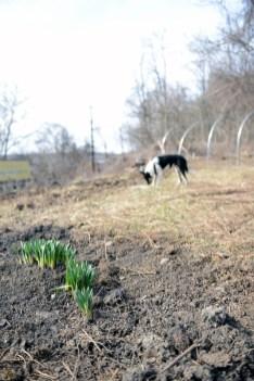 41-march-at-hazelwood-urban-farms-06