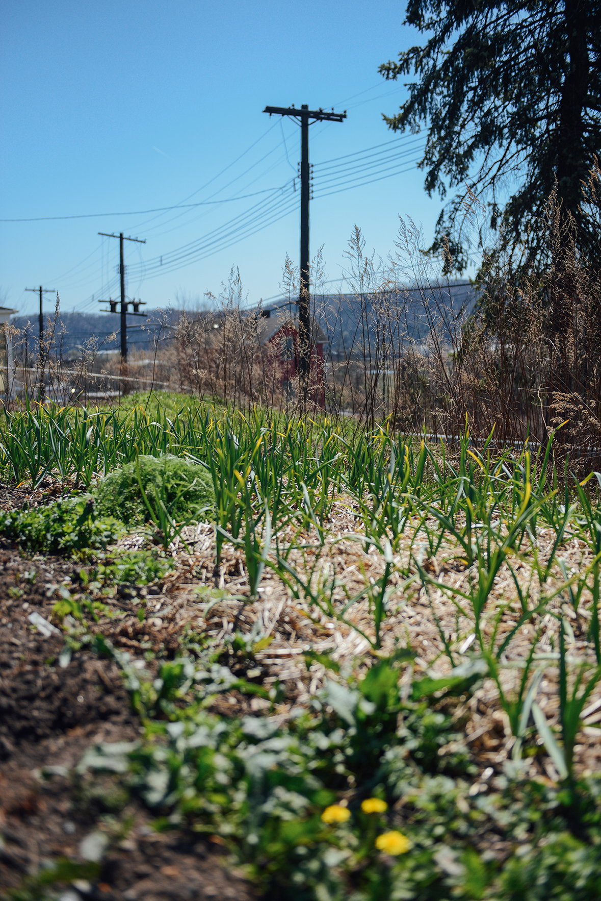 Hazelwood Urban Farms Season 2 | Spring Seedling Update // www.WithTheGrains.com