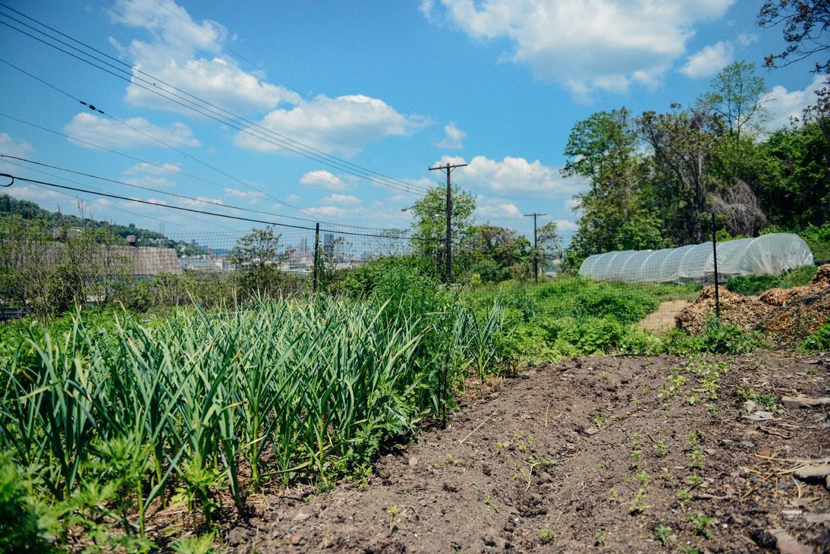 Spring at Hazelwood Urban Farms 01