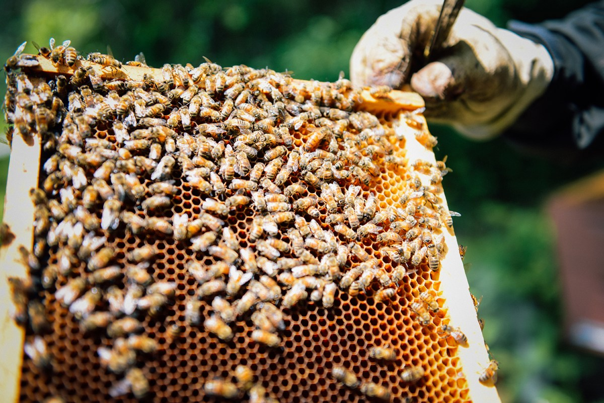 Spring at Hazelwood Urban Farms 05