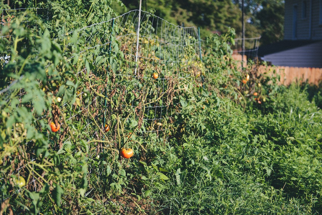 Hazelwood Urban Farms, Season 2 | Canning Tomatoes // www.WithTheGrains.com