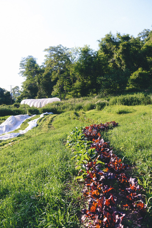 Hazelwood Urban Farms Season 3   Early Summer Harvest
