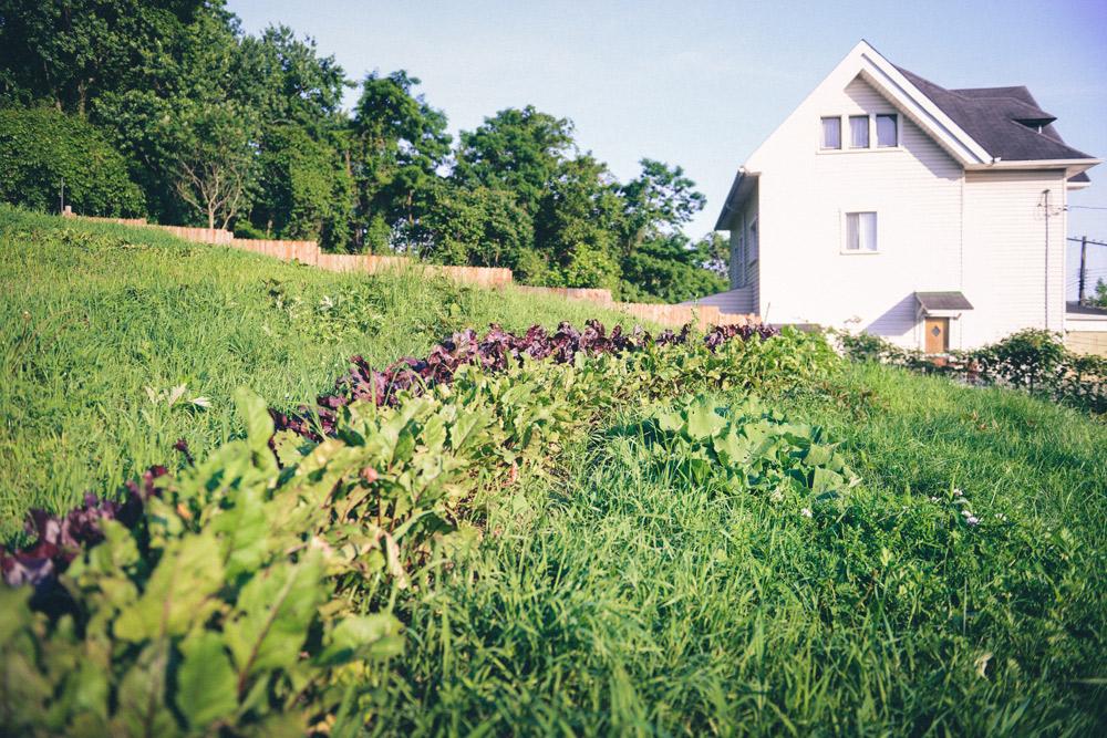 Hazelwood Urban Farms Season 3   Early Summer Harvest // www.WithTheGrains.com