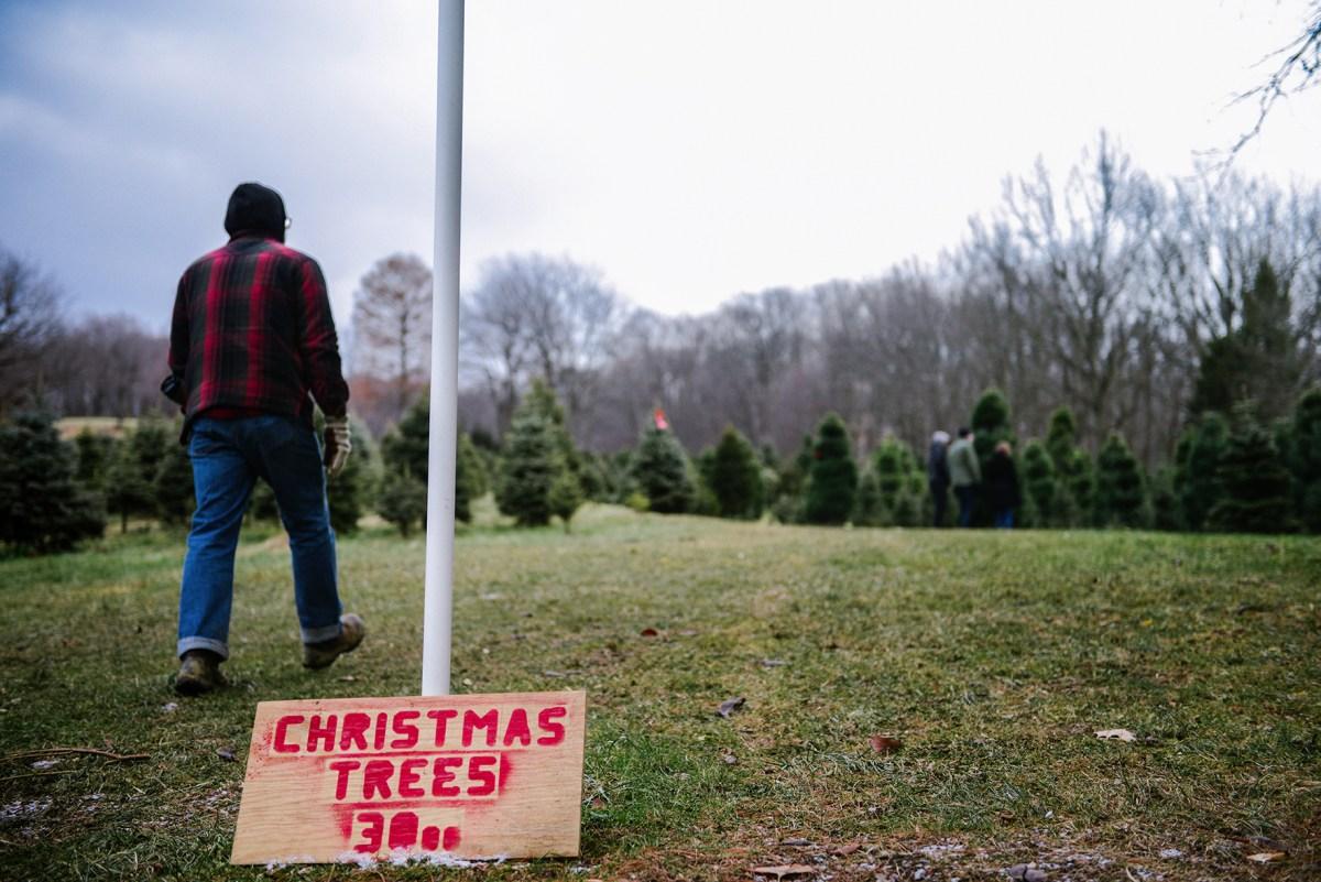 A Christmas Tree Farm & Peppermint Chocolate Cookies for Santa // www.WithTheGrains.com