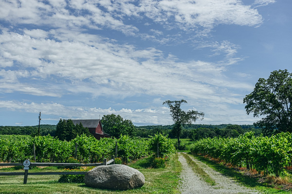Lake Erie Wine Country // www.WithTheGrains.com