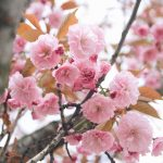 On Seasons and Looking Back on Spring