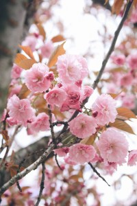 On Seasons and Looking Back on Spring // www.WithTheGrains.com