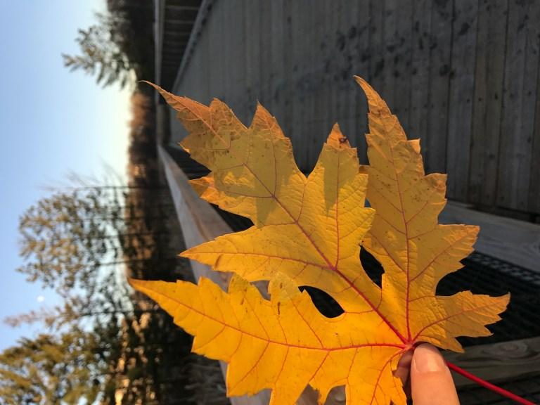 Fall Break Things