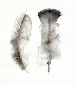 by amberalexander etsy: http://www.etsy.com/listing/58849311/turkey-feathers-archival-print-feather?ref=usr_faveitems