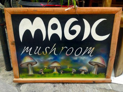 Magic Mushrooms in Bali 1