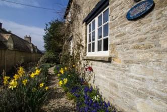 Lavender Cottage daffs