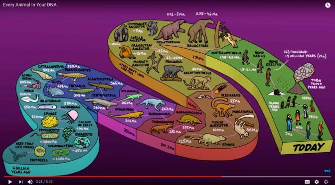 วิทย์ม.ต้น: ขนาดอะตอม, ข้อมูลต่อเนื่องสี่พันล้านปีใน DNA, การคัดเลือกพันธ์ vs. ความน่าจะเป็น