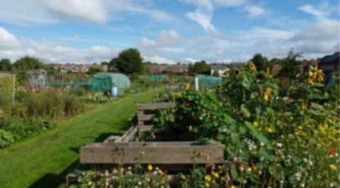 SAVE SACRISTON LANE  ALLOTMENTS