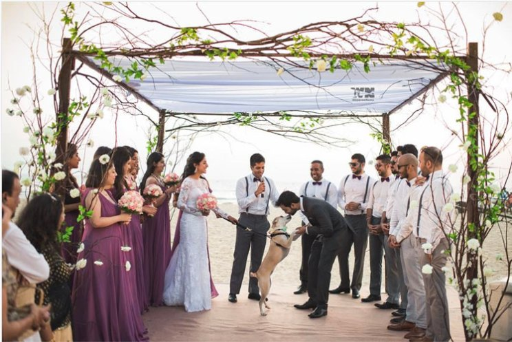 Dog wedding proposal | Indian wedding dog ideas | Save the date with dog | Save the date video Mitali and Ali #Mitali wedding by wedding Nama | Indian bride and her dog at the wedding | pet wedding | wedding with dog |Indain bride in a white gown for her Goa wedding with her dog as the ring bearer | weddingnama