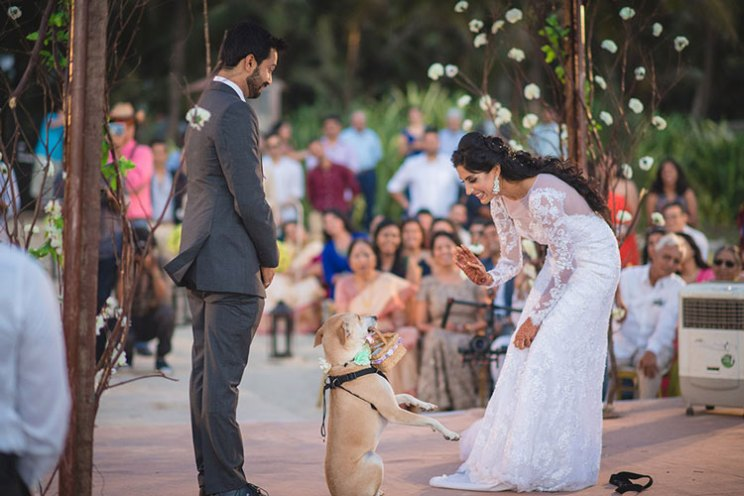 Dog wedding proposal | Indian wedding dog ideas | Save the date with dog | Save the date video Mitali and Ali #Mitali wedding by wedding Nama | Indian bride and her dog at the wedding | pet wedding | wedding with dog |Indain bride in white with her dog as ring bearer at the beach wedding in Goa | christian style wedding