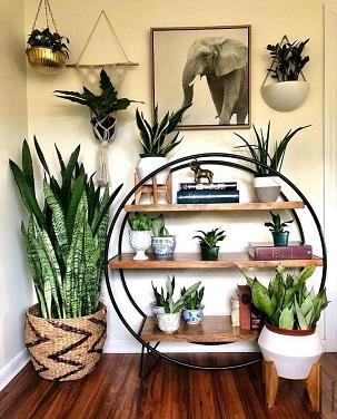 Indoor Garden | Greens | Flower pots | Home Décor ideas | inspiration
